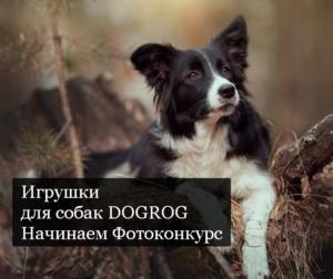 Игрушки для собак DOGROG Начинаем Фотоконкурс